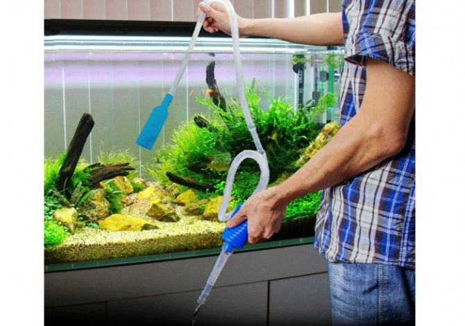 Manutenzione acquario