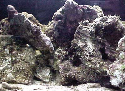 rocce, vive