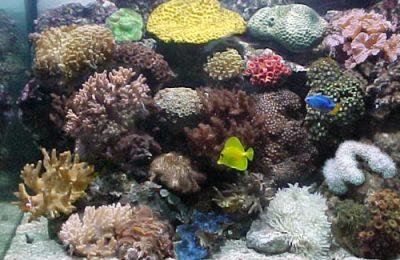 acquario di barriera di 180 litri