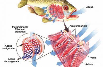 Malattie dei pesci in acquario