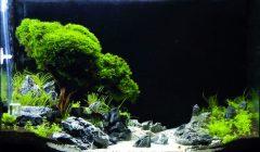 Bonsai in Acquario