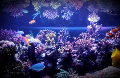 acquario di luca corcetti