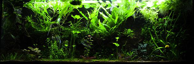 acquario di Galeazzi Dennis