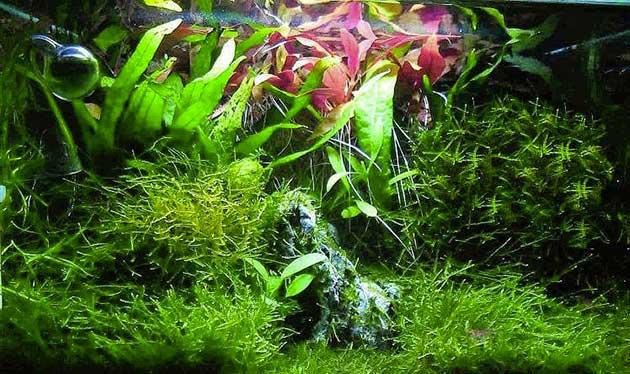 acquario di Dylan Pistorino