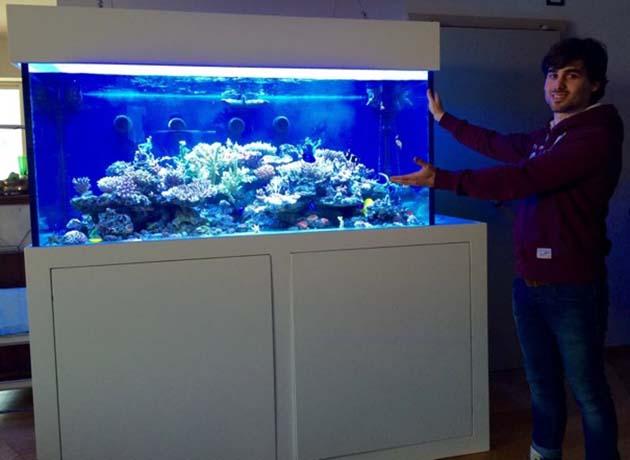 Plafoniera Led Fai Da Te Acquaportal : Personalità i pesci ne possiedono diverse acquaportal