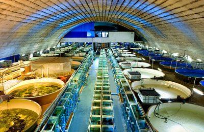 Tuscia Fish Trading