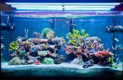 acquario di Jonathan Russo