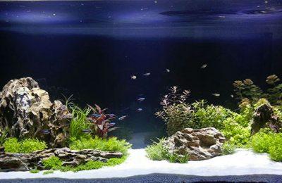 acquario di lino leobono