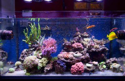 acquario di Riccardo Giulivi