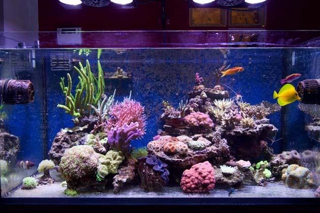 Plafoniera Led Fai Da Te Acquaportal : è definitivamente giunta l ora di difendere il pesce rosso