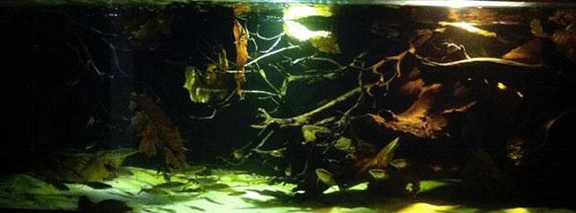 acquario di Enrico Guida