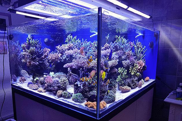 acquario di Gianmarco Dessi