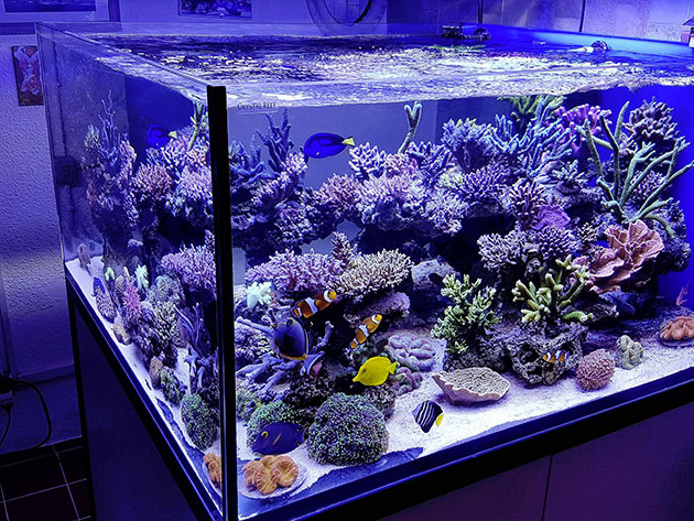 Plafoniera Led Fai Da Te Acquaportal : Plafoniera led per acquario marino fai da te a