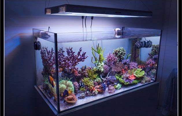 acquario di Gabriele Rossi