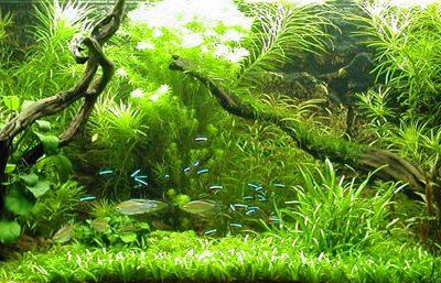 acquario piante