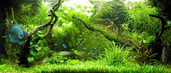 Sfondi acquario acqua dolce casamia idea di immagine for Acqua per acquario