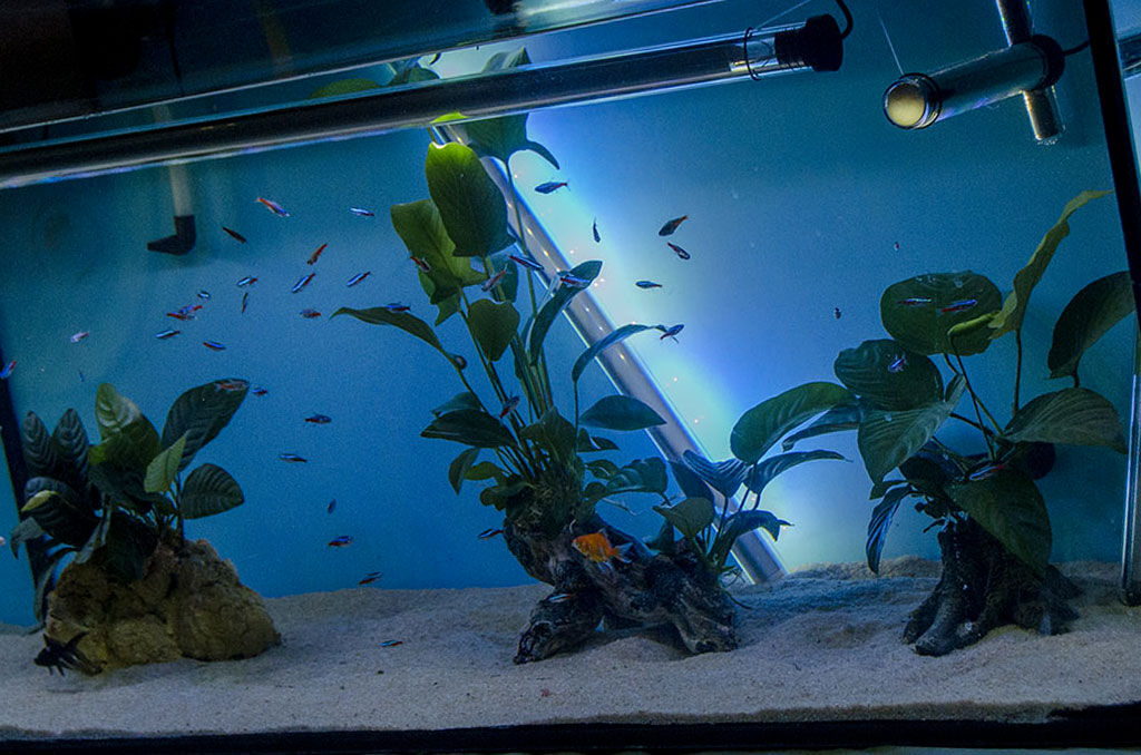 avere un acquario