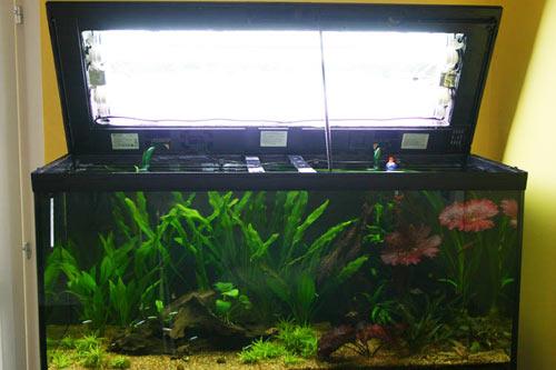 illuminazione vasca acquario