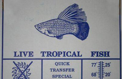 imballo professionale spedizione pesci