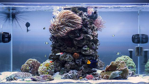 Plafoniera Led Fai Da Te Acquaportal : Fai da te ricostruzione acquario litri marino