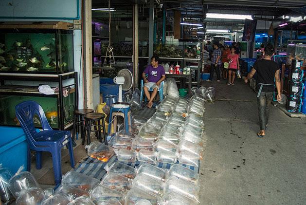 Mercato di Chatuchak Commercianti