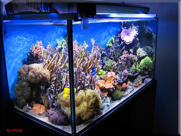 Plafoniera Led Fai Da Te Acquaportal : Reef nell antropocene salviamo il salvabile acquaportal