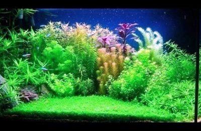 L'acquario di Dario Pezzoni