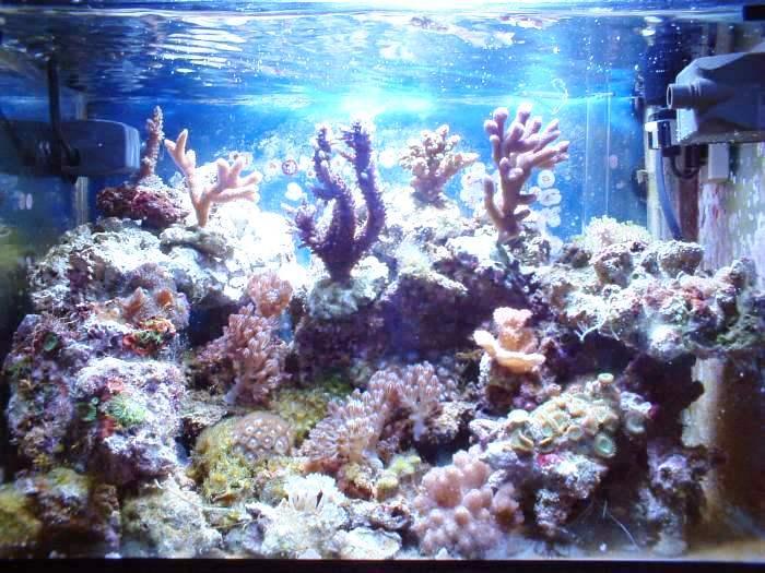 L'acquario di Emanuele Tosi