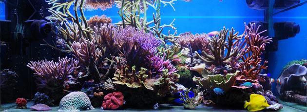 L'acquario di Samuele Albani