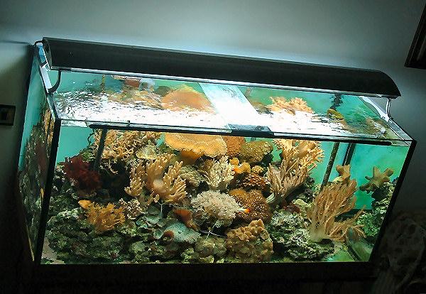L'acquario di Alessandro Gragnani