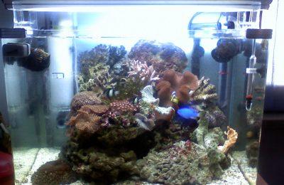 L'acquario di Bigvolpe