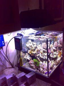 L'acquario di Alessandro Lapergola