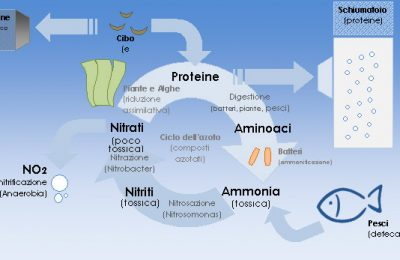Biochimica della filtrazione