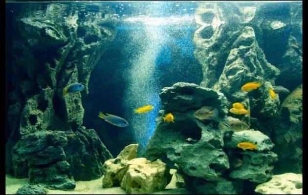 Sfondo 3d per acquari