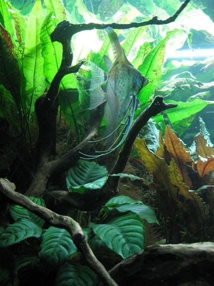 L'acquario di Andrea Nosi