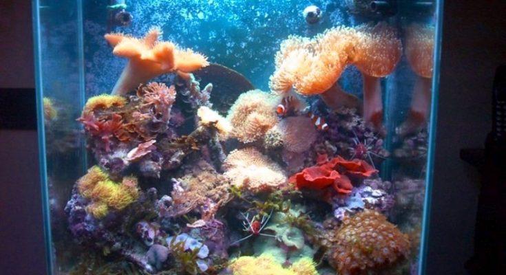L'acquario di Simone Colombi