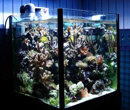 L'acquario di Stefano Ventilati