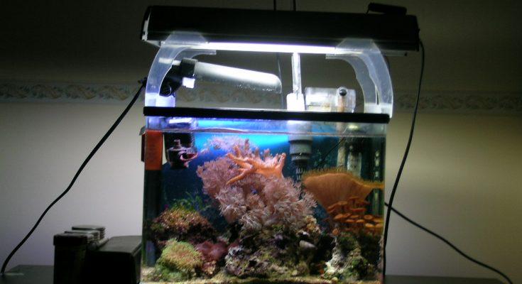 L'acquario di Giuffrida