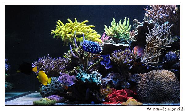 L'acquario di Paolo Marzocchi