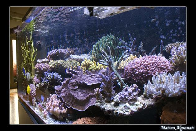 L'acquario di Andrea Garattini