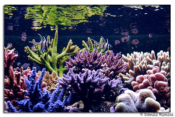 L'acquario di Andrea Negusanti