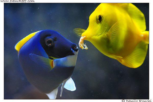 cibo pesci