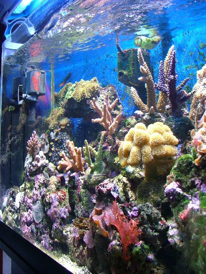 L'acquario di Wortice
