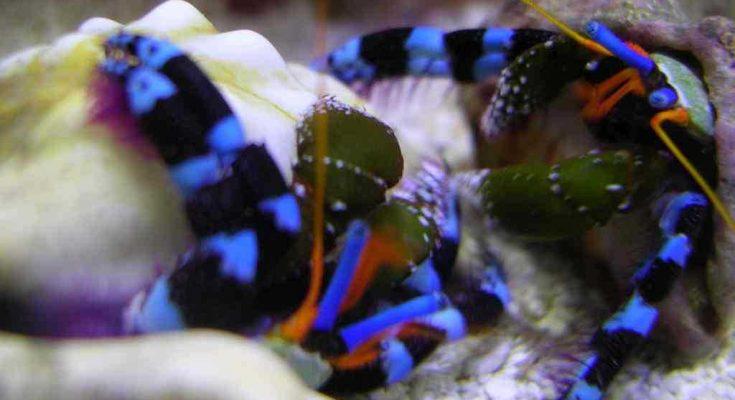 L'acquario di Pascia