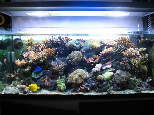 L'acquario di Marco Negro