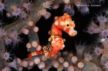 Cavallucci marini e nanoreef