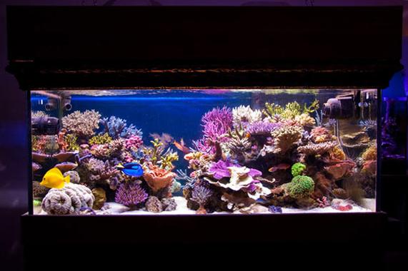 L'acquario di Marcello Ascani