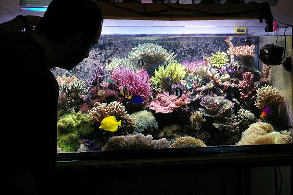 L'acquario di Giacomo D'Onofrio