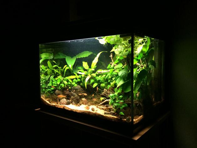 acquario di Marco Longo