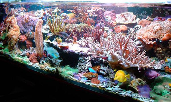 L'acquario di Andrea Zavoli